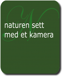 Naturen sett med et kamera for barn