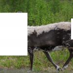Hvilket dyr er dette man tro?